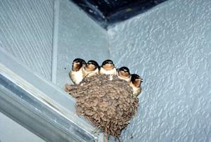 Ceramic Bird Houses? Why not! | JANE STREET CLAYWORKS